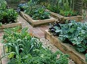 Gardening Ideas Small Yards