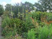 Visit Cotswold Garden Flowers