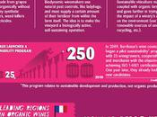 Bordeaux Organic Wines Infographic