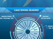 Great White Shark Cage Diving Hotspots World