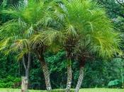 Maintenance Palm Trees Your Home Garden