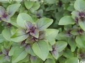 Medicinal Plants Home Garden