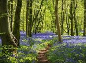Only Britain's Native Woodlands Good Condition