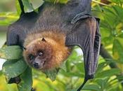 Bats Protected Endangered Species Act?