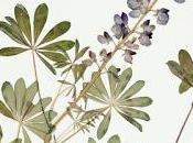 Herbarium: Quest... Book Review More)