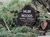 MUIR WOODS: California's Tallest Trees Caroline Arnold Intrepid Tourist