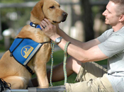 Veterans Rave About PTSD Service Dogs