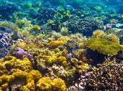 Snorkelling Twin Peaks Reef
