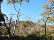Langi Ghiran, Ghiran State Park, Victoria. Winter 2012