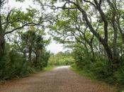 Half Hike Pinckney Island Hilton Head