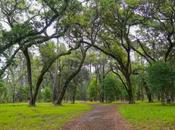 Pines Forest Preserve Worth Admission