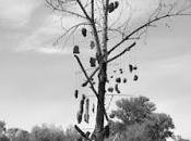 Danny's Rock Tree