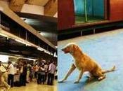 Ways Which Delhi Metro Kicks Mumbai Local's