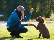 Train Your Fur-ever Friend with These Helpful Tips Simple Commands