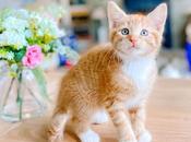 Newest Member Family Kitten Charizard!