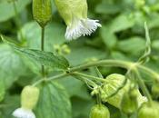 Great Blackberry Garden Treasure Hunt Discoveries