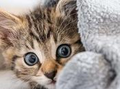 Kittens Available Adoption Everything Need Know About Kitten Pets Your Petsmart Finalize Store Bring Papers Receive Free Save Over...