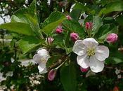 Fancy Flowering Fruits