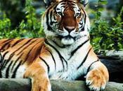 Tiger Protection Force: Bangladesh