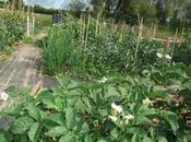 Allotment Mid-year Review