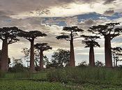 Magnificent Weird Trees
