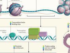 ENCODE: What Defines Genomic Function?