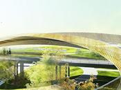 Boards: Sculptural Bridge