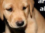 York City Proposes Registry Animal Abusers