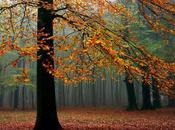{hello} Autumn