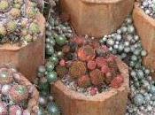 Alpine Troughs, Miniature Gardens