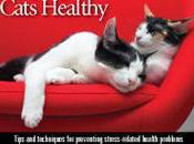 Ways Keep Cats Active Healthy