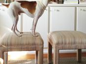 Dogs Stools