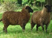 Diane Falck Growing Wool...