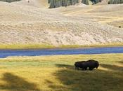 Yellowstone Trip Part