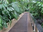 Kew, Wander Through Palm House