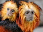 David Attenborough's Endangered Species Ark, Frontier Style!