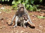 Monkey Mania: Macaques Thailand