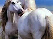 North Korea Says Discovered Unicorn Lair