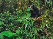 Jealousy: Edward Parker, Wildlife Photographer