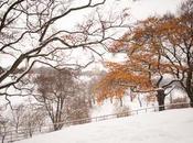 Fantasy Winter Wedding