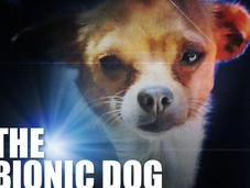 Ready World's Smallest Bionic DOG!