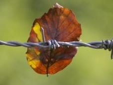 Wire Life: Adoption Story