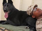 "Military Service Dogs: ""Surplus Equipment?"""