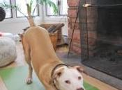 Doggie Yoga: Health, Body Mind With Best Friends