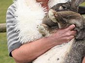 This Giant Bunny Rabbit Over 4-feet Tall, It's Alive