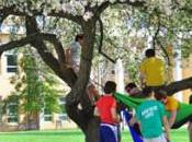 Asheville Police: High Winds Suspected Murdering UNCA Crab Apple Tree Still Loose