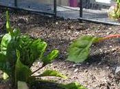 Gonna Watch Garden Grow