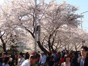 Flowers! Spring Flower Festival