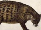 Featured Animal: African Civet