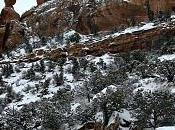 2011 February Colorado National Monument Snow Storm Aftermath